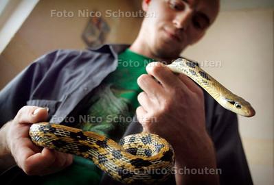 HC - SLANGEN ENZ. VAN DANNY KOUWENHOVEN - Een niet giftige Streepstaartslang - DEN HAAG 5 SEPTEMBER 2005 - FOTO NICO SCHOUTEN
