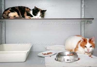 AD/HC - twee verwaarloosde katjes bij haagse dierenambulance - WASSENAAR 19 FEBRUARI 2007 - FOTO NICO SCHOUTEN
