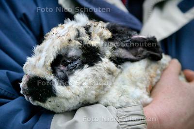 AD/HC - (KNAAG) DIERENOPVANG NA DE BRAND - konijn dat ter nauwernood de brand heeft overleeft, oa een oog is verbrand en z'n haren zijn verschroeit - ZOETERMEER 26 FEBRUARI 2007 - FOTO NICO SCHOUTEN