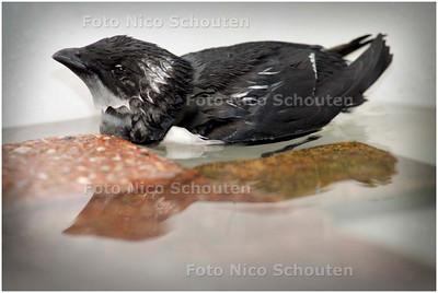 AD/HC - Alk bij de delftse vogelopvang - DELFT 12 NOVEMBER 2007 - FOTO NICO SCHOUTEN