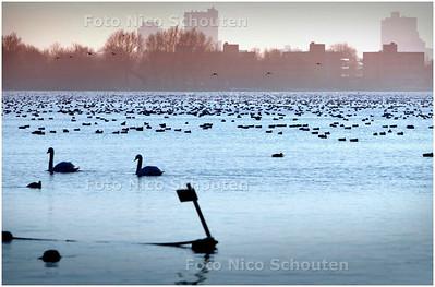 AD/HC - IJSKOUD - doordat veel oppervlaktewater bevroren is trekken watervogels massaal naar het Noord Aa - ZOETERMEER 29 DECEMBER 2008 - FOTO NICO SCHOUTEN