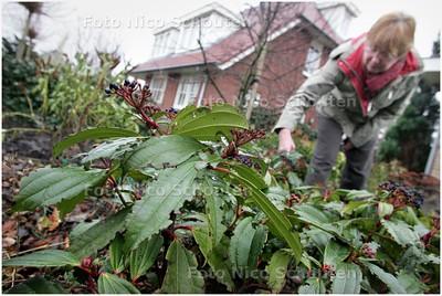 AD/HC - Vrouw heeft last van snuitkevers in de tuin;YPENBURG - DEN HAAG 3 FEBRUARI 2009 - FOTO NICO SCHOUTEN