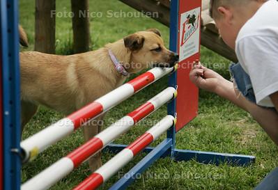"""hondenfeest onderdeel: X-factor van uw hond - De zes maanden oude """"mopscollie"""", kruising tussen een mopshond en een schotse colie, niet luisterend naar de naam Ginger had regelmateig grote moeite met de zware hindernissen - ZOETERMEER 6 juni 2009 - FOTO NICO SCHOUTEN"""