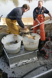 Zieke karpers vangen in de Floriadeplas - ZOETERMEER 7 APRIL 2010 - FOTO NICO SCHOUTEN