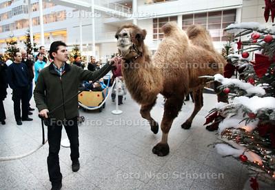 Kerststal komt weer in Atrium van stadhuis. Laatste stukje voorbereiding met de beesten - DEN HAAG 16 DECEMBER 2010 - FOTO NICO SCHOUTEN