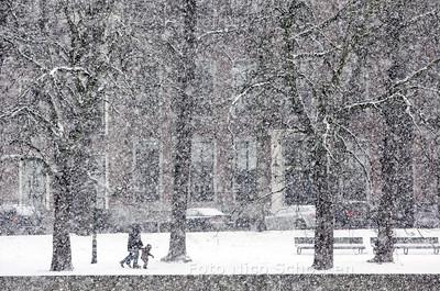 Sneeuw op de Kortevijverberg