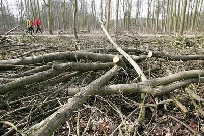 HAAGSE BOS TAKKENZOOI - In opdracht van Staatsbosbeheer is het Haagse Bos deze winter rigoreus uitgedund. Om de nu nog aanwezige bomen meer ruimte te geven zijn er ontelbaar veel bomen gekapt. Op veel plekken staan nu helemaal geen bomen meer. Bijna het hele bos ligt nu vol met takken en boomstammen - DEN HAAG 17 MAART 2010 - FOTO NICO SCHOUTEN