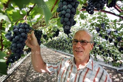 Wim van Dijk, grondlegger van themapark De Westlandse Druif. Hij neemt afscheid - MONSTER 22 SEPTEMBER 2010 - FOTO NICO SCHOUTEN