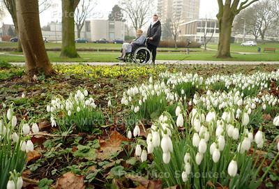 Sneeuwklokjes (en andere gele bloemetjes, GEEN krokkussen!) in het Wilhelminapark - ZOETERMEER 9 FEBRUARI 2011 - FOTO NICO SCHOUTEN