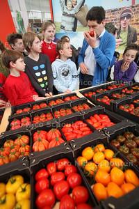 Scholieren van de Eerste Montessorischool uit Monster krijgen een rondleiding door glastuinbouweducatiecentrum TomatoWorld - HONSELERSDIJK 15 MAART 2011 - FOTO NICO SCHOUTEN