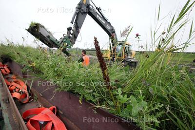 Ecoloog Ben van As gaat aan de slag om zeldzame orchideeen te verhuizen van Schiedam naar de Den Hoorn - Het gaat om de bruine stengel in het midden van de foto - DEN HOORN 9 SEPTEMBER 2011 - FOTO NICO SCHOUTEN