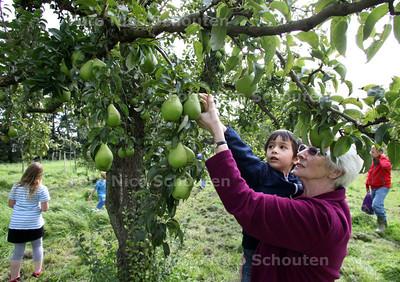 Fruitactiviteiten, peren plukken, inloopmiddag wijktuin Broekweg - ZOETERMEER 14 SEPTEMBER 2011 - FOTO NICO SCHOUTEN