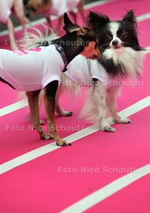 CHIHUAHUA RACE; Den Haag Shopping Night - DEN HAAG 14 MEI 2012 - FOTO NICO SCHOUTEN