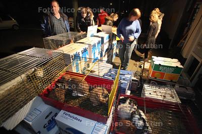 Geen 300 maar 126 Franse konijnen komen aan bij knaagdierenopvang Het Knagertje, die samen met andere opvangcentra een nieuw thuis voor ze gaat zoeken - DEN HAAG 9 MAART 2012 - FOTO NICO SCHOUTEN