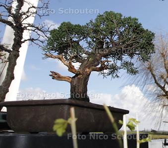 Bonzaiboompje van Martin Bonvie (26). Hij is expert in het kweken van bonsaiboompjes. En won hiermee ook een prijs - DEN HAAG 13 APRIL 2013 - FOTO NICO SCHOUTEN