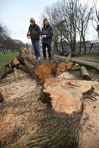 Jespen en Kirsten vinden het jammer dat de vier mooie grote bomen langs de Schaapweg omgezaagd zijn. Ze begrijpen ook niet waarom dat nodig was. Volgens hun waren de bomen nog gezond - RIJSWIJK 26 FEBRUARI 2013 - FOTO NICO SCHOUTEN
