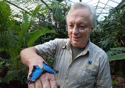 Vlinders aan de Vliet - Jan Kienjet met een blauwe Morpho uit Midden Amerika (Costa Rica) - LEIDSCHENDAM 13 FEBRUARI 2013 - FOTO NICO SCHOUTEN