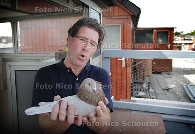 Charles de Zwart in zijn duiventil maakt zich zorgen over de opkomst van de slechtvalk in de stad - DEN HAAG 17 JUNI 2013 - FOTO NICO SCHOUTEN