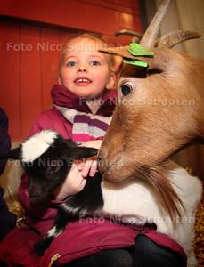 Geboortegolf op Weidemolen, Finne met een jong dwerggeitje en een bezorgde moedergeit- ZOETERMEER 18 MAART 2013 - FOTO NICO SCHOUTEN