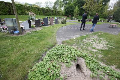 Last van konijnen op begraafplaats aan de Hoflaan (beheerder wil niet op de foto) - ZOETERMEER 30 APRIL 2014 - FOTGRAFIE NICO SCHOUTEN