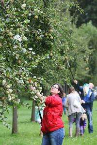 Fruit plukken op de de oude boomgaard bij de Uithof - DEN HAAG 30 AUGUSTUS 2014 - FOTOGRAFIE NICO SCHOUTEN