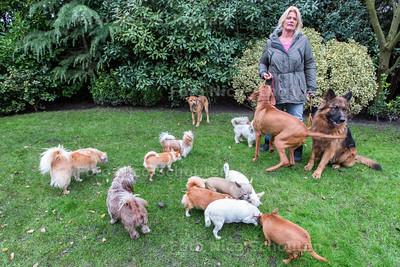 mevrouw Bogaart met haar honden - DEN HAAG 26 NOVEMBER 2014 - FOTOGRAFIE NICO SCHOUTEN