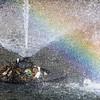 Meerkoet maakt nest op spuitende fontein - Of deze plek in het water op de Laan van Wateringse Veld verstandig gekozen is zeer de vraag - DEN HAAG 30 APRIL 2015 - FOTO NICO SCHOUTEN