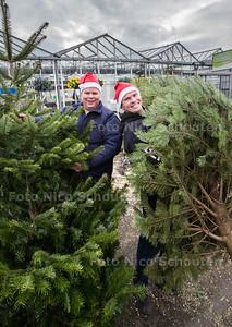 Familie Zuijderwijk van kwekerij De Zonnebloem verkoopt ook kerstbomen - Broers Aad (l) en Maurits Zuijderwijk tuusen de sparren - MONSTER 6 DECEMBER 2015 - FOTO NICO SCHOUTEN