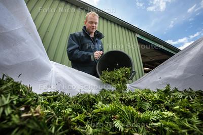 Medewerker Hendrik-Jan Konijn van hoveniersbedrijf Van der Spek gooit ingezameld taxusafval in een speciaal daarvoor bestemde bak. Het groenafval wordt gebruikt om grondstoffen voor chemokuren uit te halen - BENTHUIZEN 22 JUNI 2015 - FOTO NICO SCHOUTEN