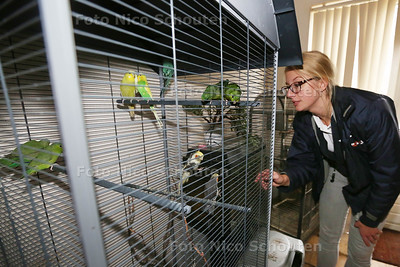 Dierenambulance haalt honderden dieren weg op Azurblauw. Cherinda Caspers bij één van de kooien met parkieten - ZOETERMEER 19 NOVEMBER 2015 - FOTO NICO SCHOUTEN