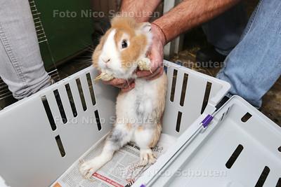Dierenambulance haalt honderden dieren weg op Azurblauw. Een konijn met doorgegroeide nagels - ZOETERMEER 19 NOVEMBER 2015 - FOTO NICO SCHOUTEN
