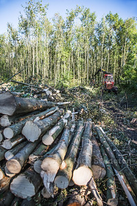 In het Balijbos liggen enorme stapels boomstammen. Die zijn afkomstig van de enorme bomenkap in het bos - ZOETERMEER 1 OKTOBER 2015 - FOTO NICO SCHOUTEN