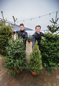 """Verschillende kerstbomen bij tuincentrum Carlton - Jeroen van den Bos   (l) en eigenaar Marcel Koene tonen 4 soorten kerstboom vlnr: De fijnspar (Picea abies), de zilverspar (Picea omorika), dwergspar (Picea glauca Conica) en de Nordman (Abius Nordmaniann) - """"S-GRAVENZANDE 17 DECEMBER 2016 - FOTO NICO SCHOUTEN"""