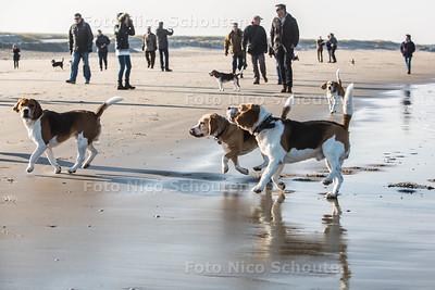 Beagleclub loopt met beagle-honden over het strand van Ter Heijde - TER HEIJDE 27 FEBRUARI 2016 - FOTO NICO SCHOUTEN