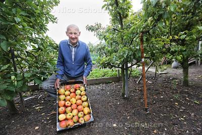 Wim Kouwenhove fruitbomen expert - DE LIER 25 OKTOBER 2016 - FOTO NICO SCHOUTEN