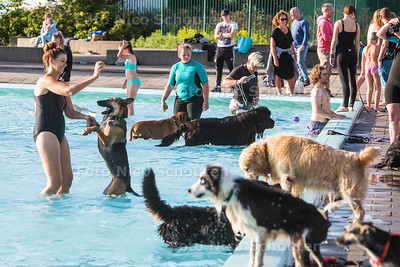 Zwemmen met honden in het buitenbad het Keerpunt - ZOETERMEER 31 AUGUSTUS  2017 - FOTO NICO SCHOUTEN