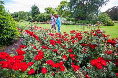 Rosarium Westbroekpark - DEN HAAG 23 JUNI 2017 - FOTO NICO SCHOUTEN