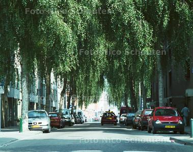 SCHILDERSWIJK; DE BOMEN BEPALEN VOOR EEN GROOT DEEL DE SFEER OP DE HOEFKADE; DEN HAAG 26 AUGUSTUS 2001; FOTO: NICO SCHOUTEN
