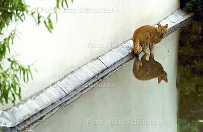 KATER op het dak  - FOTO NICO SCHOUTEN