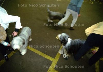 HZ - RASHONDENTENTOONSTELLING BLOEMENVEILING - BLEISWIJK - 2 NOVEMBER 2002; FOTO: NICO SCHOUTEN