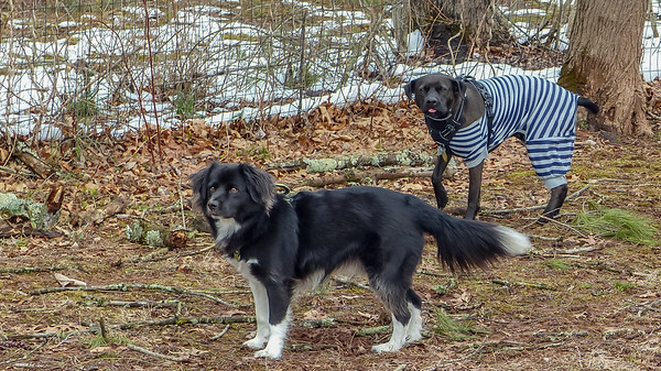 2018-03-13 Oreo and Scout