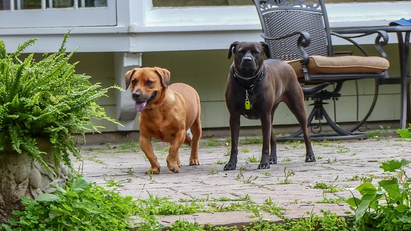 2018-06-23 Scout and Shorty