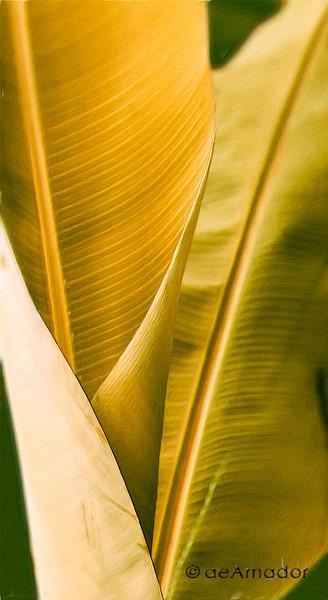 amador-bananaedit-12x22-FINaeamador©-FA-Sh