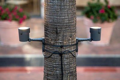 Fashion Island Tree Ring