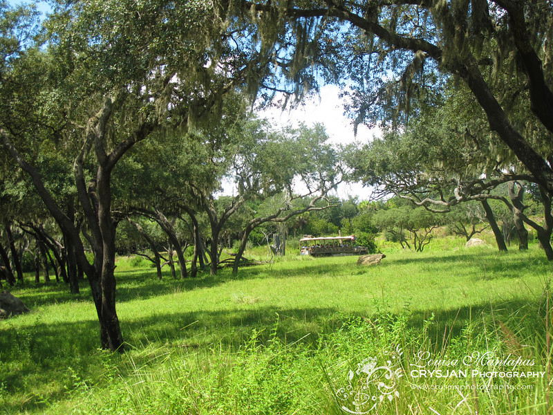 Safari Ride at Animal Kingdom