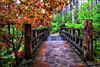 The Sunrise Bridge - Garvan Woodland Gardens - Hot Springs, Arkansas - A Rainy Day in April 2014