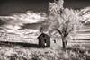 Boulder Cabin - Wichita Mountains Wildlife Refuge - Lawton, Oklahoma