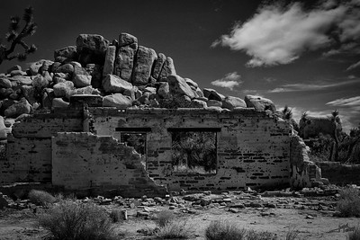 Ryan Ranch Joshua Tree B&W