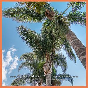 Valentine_palm trees