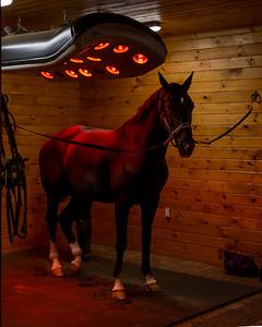 HorseWarmer